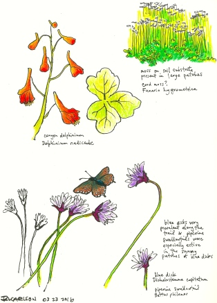 MarchWildflowers3_2016Mar23