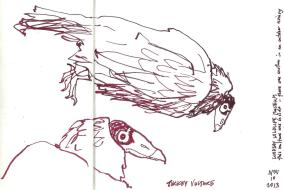 LindsayWildlife_2013Nov10_vulture
