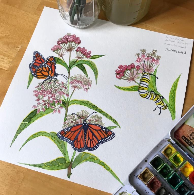 MonarchAndMilkweed_2018Mar15