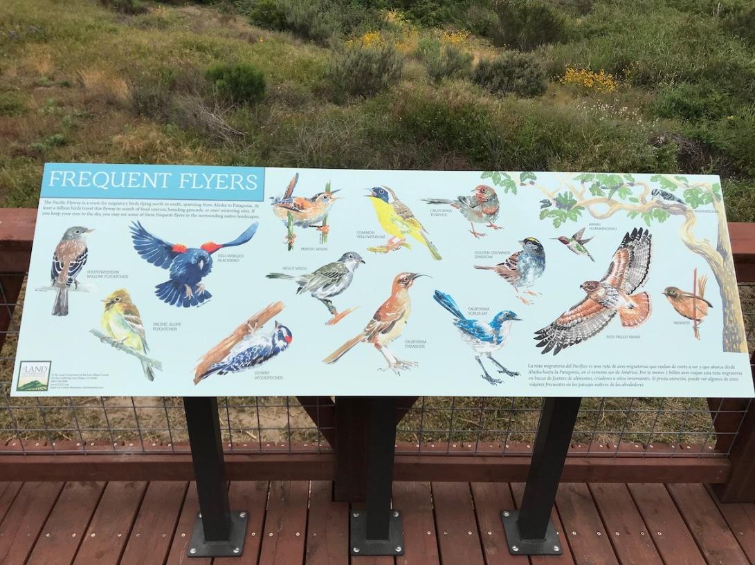 sm Birds Photo
