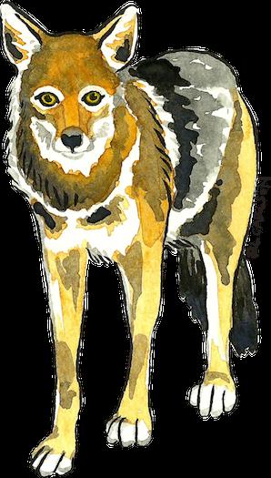 EcoHunt_Coyote_sm