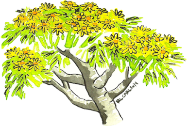EcoHunt_GiantCoreopsis_sm