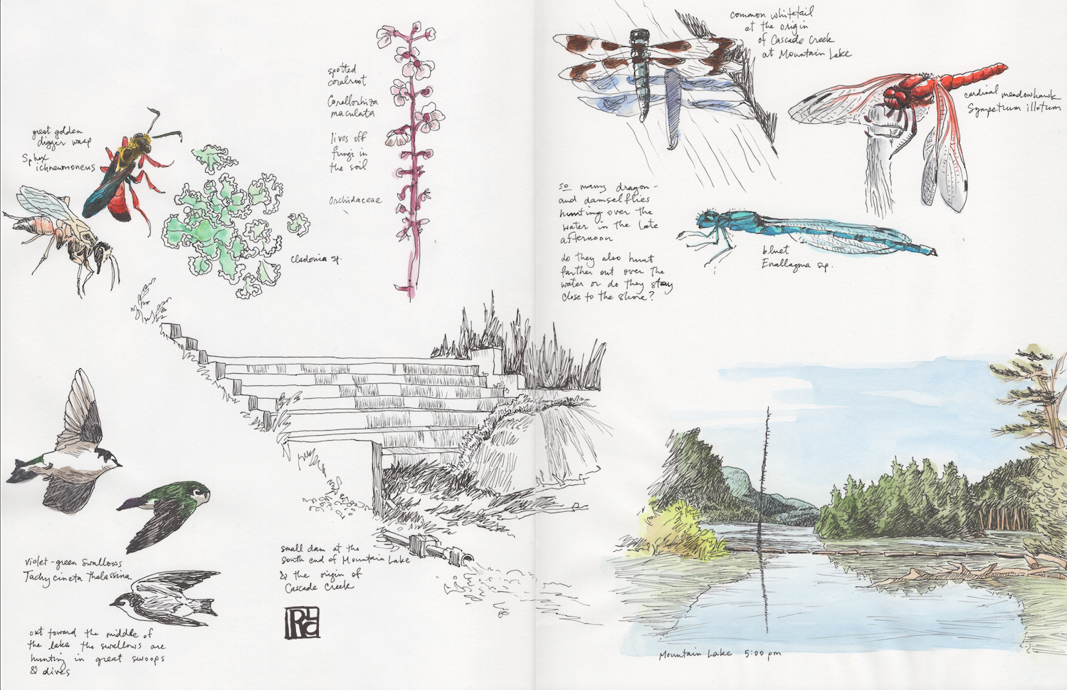 CascadeCrSketchbook Spread 4 sm